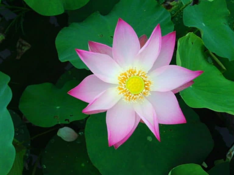 Where to Find the Best Pond Plants in Orange County?