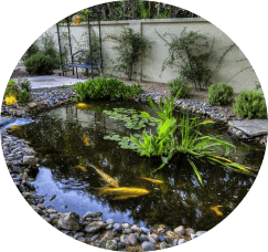 pond-maintenance-services