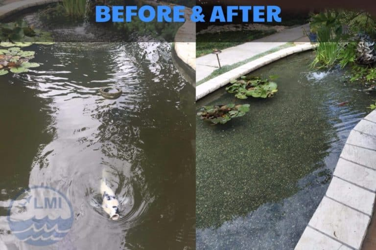 Koi pond maintenance before and after image