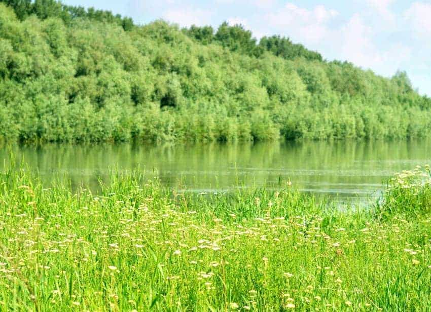 Pesticide-Free Lake Management Methods