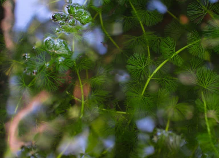 What Are Emergent Weeds?