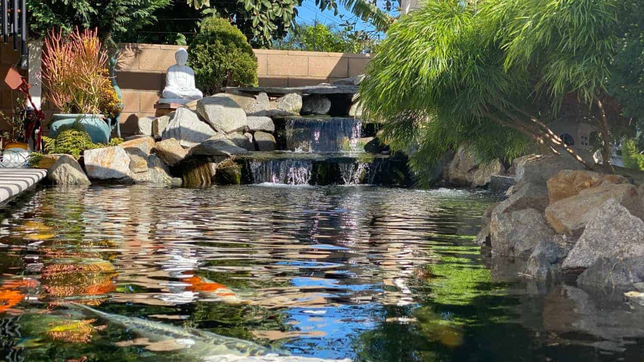 backyard pond installation westminster ca